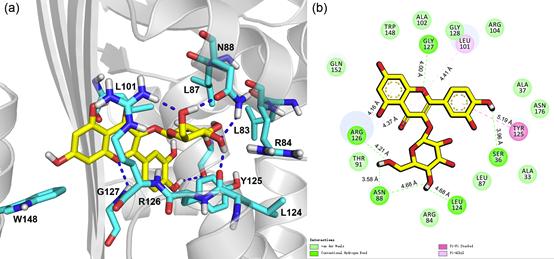 异槲皮素与卵清蛋白的结合模式
