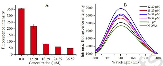 异槲皮素对OVA荧光强度以及蛋白内荧光的影响